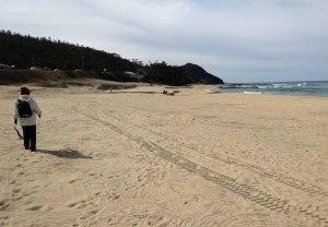 すっきり美しくなった浜