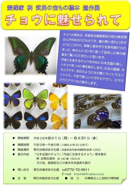チョウの標本展