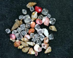 微小貝と高温石英